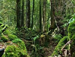 Enjoy some Time in the Forest of Dean