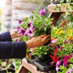 Tips for Choosing Plants Online