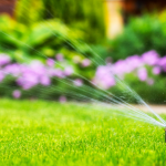 Tips For Looking After Your Garden During a Heatwave